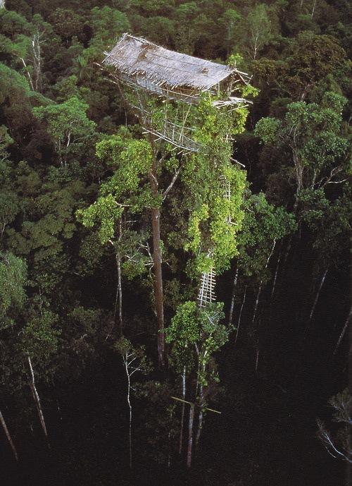 La casita del árbol más alta